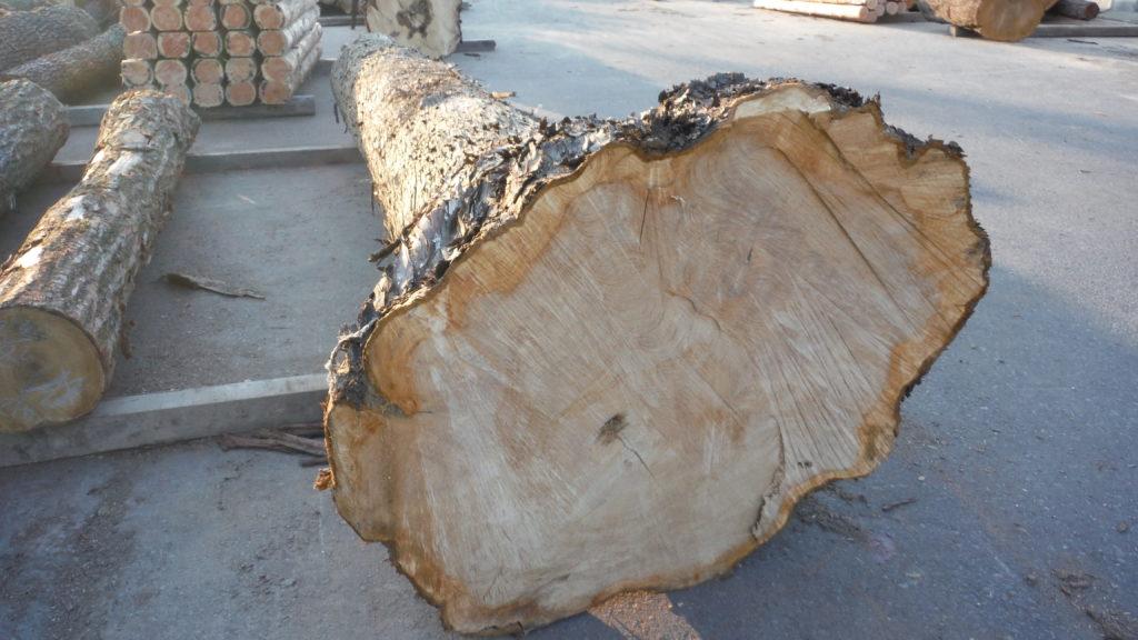ヒバ 特殊材大径木 4m×48㎝